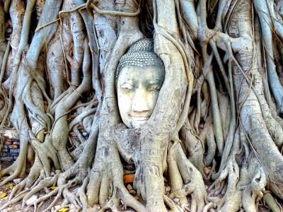 Cabeza de buda en un árbol