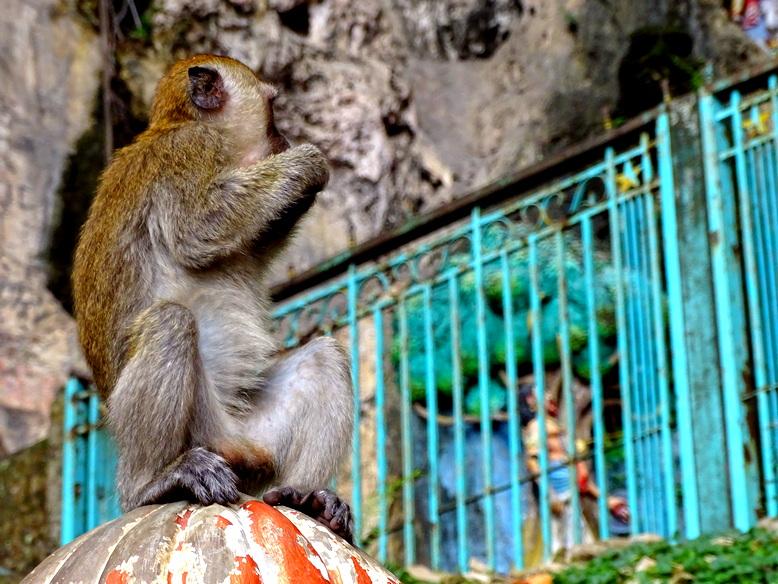 Y muchos monos...